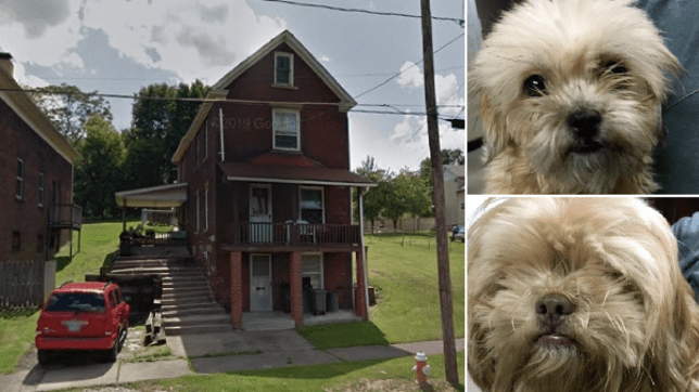 Photo of house next to photos of two dogs