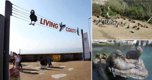 Living Coasts in Torquay, Devon, which is run by Wild Planet Trust, will not be reopening after the coronavirus pandemic