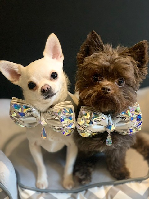 romeo and reggie wearing sparkling bow ties