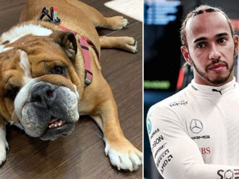 Lewis Hamilton reveals dog Roscoe is now 'fully vegan' and 'super happy' with new lifestyle after pup Coco dies