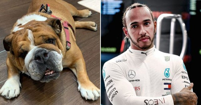 Lewis Hamilton pictured alongside his dog Roscoe