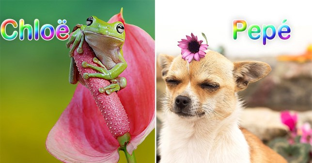 a dog and a frog with names