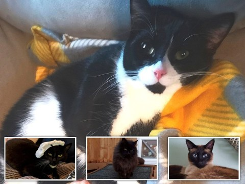 Cat killer on the loose after four pets poisoned in same street