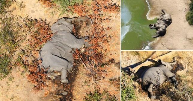 Aerial photos show elephant carcasses in the Botswana Delta