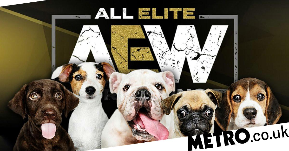Adorable 'puppy wrestling match' confirmed for AEW Fyter Fest show