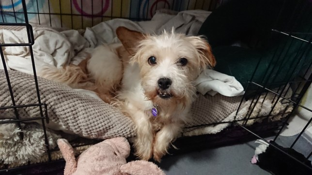 Dora the dog after being rescued by mayhew animal home