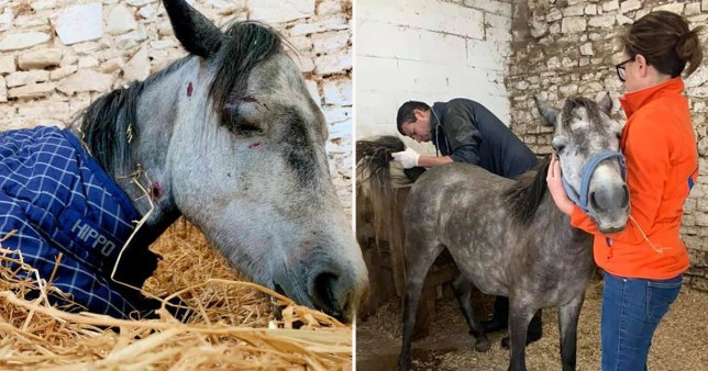 Pony dies in front of rescuers after being brutally beaten by teens