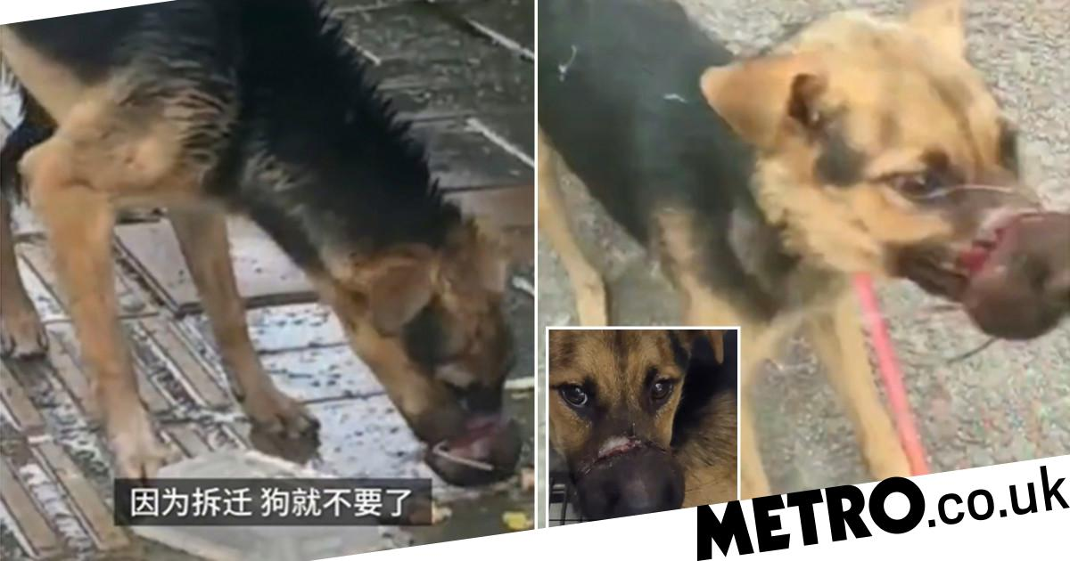 Owner bound dog's mouth shut and tried to sell it to meat vendors