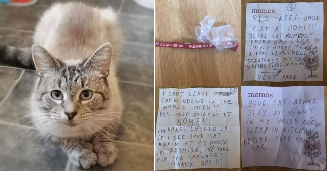 A couple have been left scared to let their beloved cat out after he came home with an angry note stuck to his collar Pictures: Media Wales
