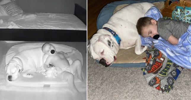 Adorable moment toddler sneaks out of bed to cuddle dog