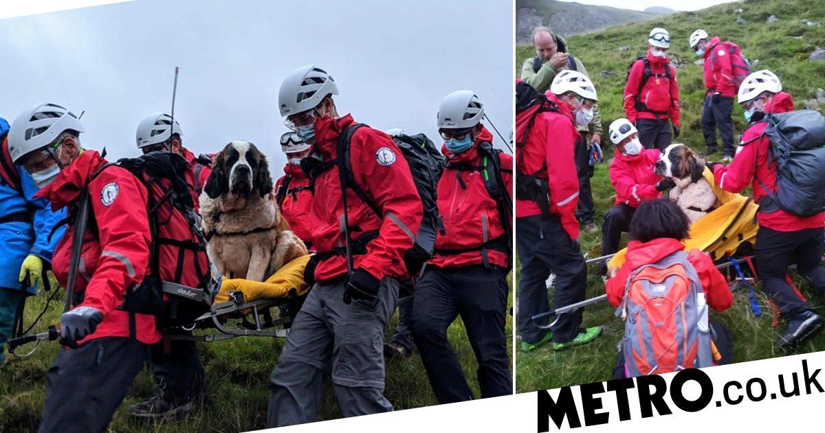 St Bernard dog rescued from England's highest peak