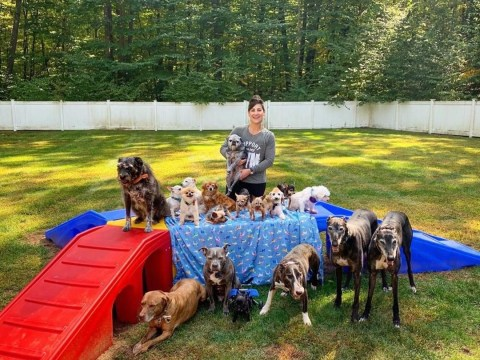 Couple spends £40k doing up their home so they can give their 20 rescue dogs the best life possible