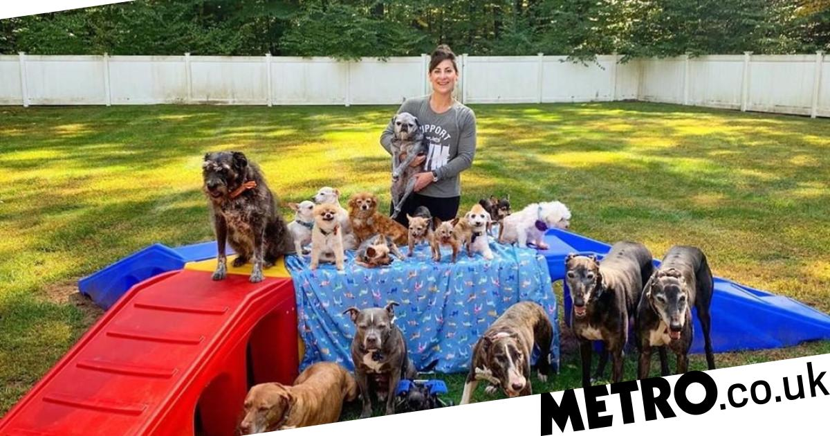Couple spends £40k doing up home so they can give 20 rescue dogs the best life