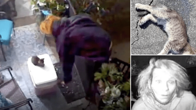 Grabs of woman taking kitten, dead kitten, and close-up of kitten killer's face