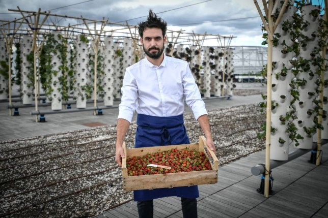 A chef holding a crate of berries on the urban farm in Paris