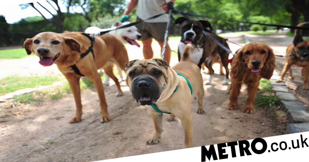 For how long do you really need to walk different breeds of dog?