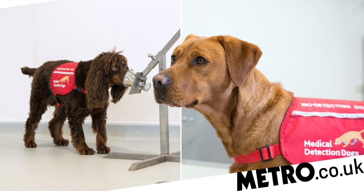 Dogs need volunteers to help them sniff out coronavirus