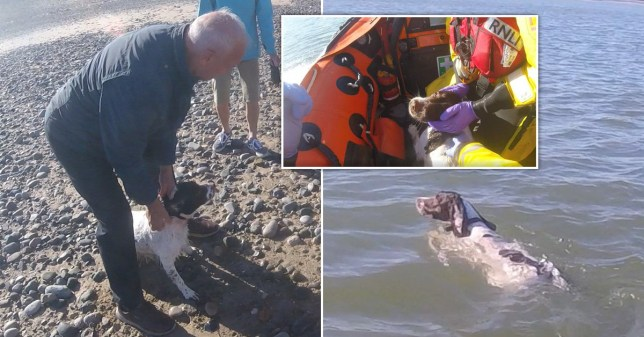 Dog rescued after chasing seagulls