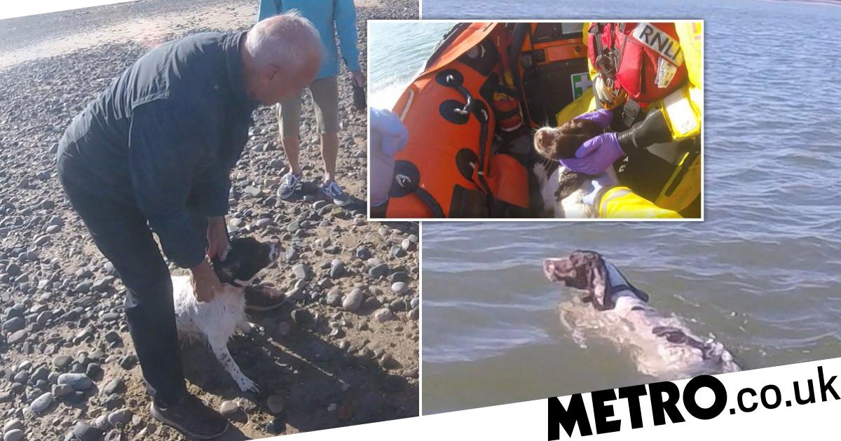 Dog rescued by lifeboat after getting stranded chasing seagulls