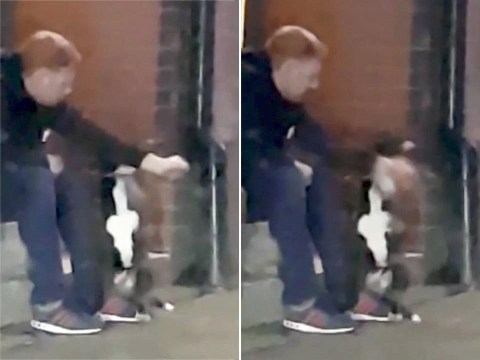 Man filmed repeatedly punching his dog in the head as he 'lost his temper'