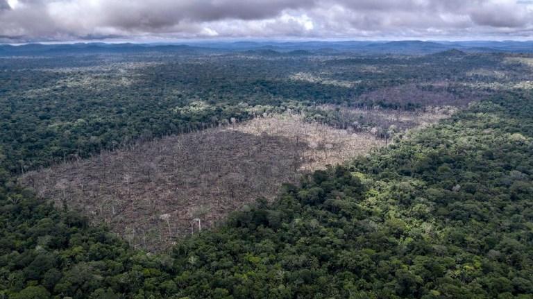 Déforestation illégale trouvée dans le territoire indigène d'Uru-Eu-Wau-Wau.