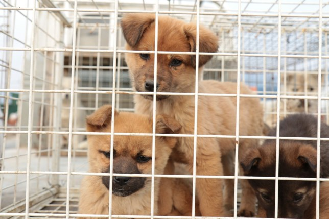 Experts have raised fears over puppy smuggling as demand for dogs has soared during lockdown.