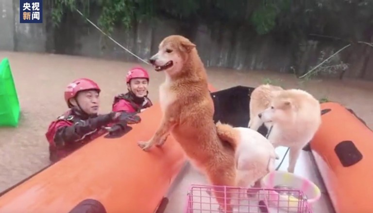 Footage shows the dogs being rescued by firefighters