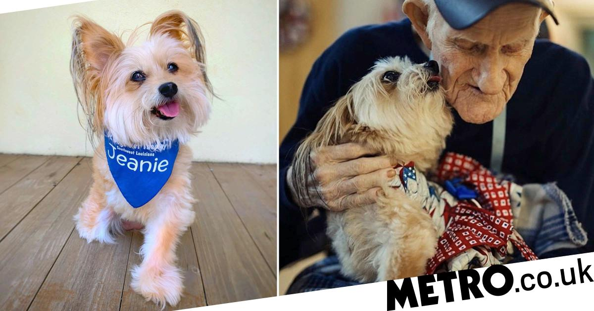 Meet Jeanie – the adorable therapy dog who beat thyroid cancer
