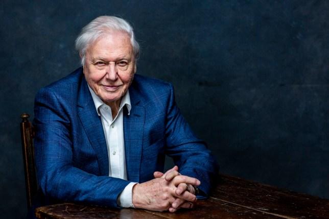 David Attenborough Planet Earth A Celebration