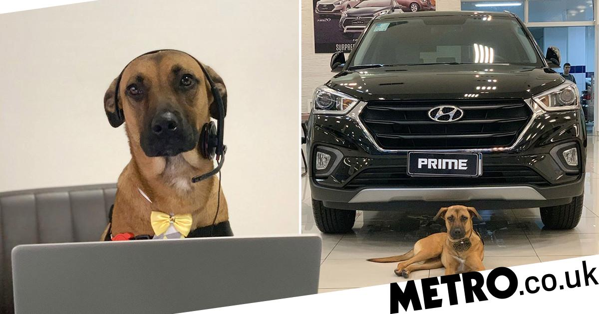 Stray dog adopted as Brazilian car company mascot