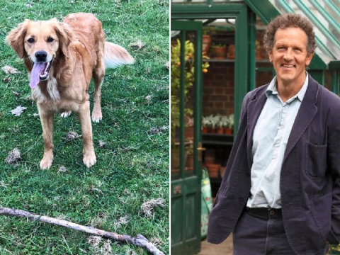 Gardeners' World's Monty Don shares update on dog Nellie after retriever impaled herself on stick during game of fetch