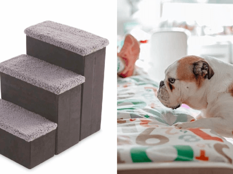 Smaller and older pets just got a leg up with Aldi's dog stairs to help them get on the sofa