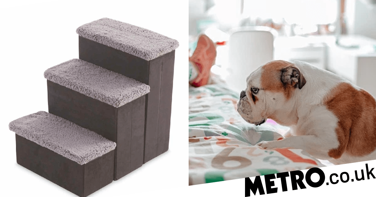 Small pets just got a leg up with Aldi's dog stairs to help them get on the sofa