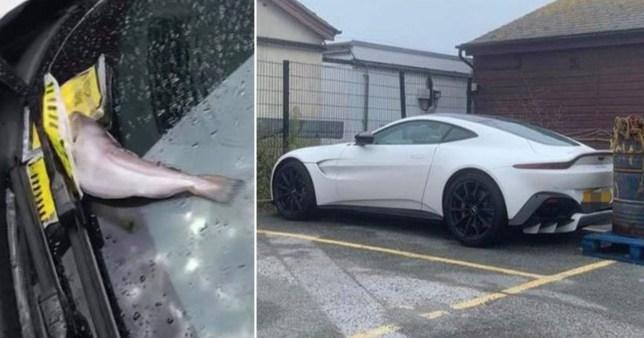 Fish left rotting on luxury sports car