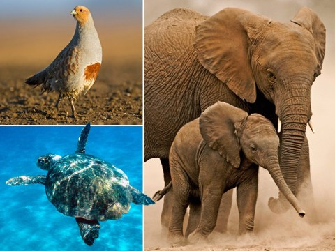 Wildlife populations have plummeted almost 70% in less than 50 years