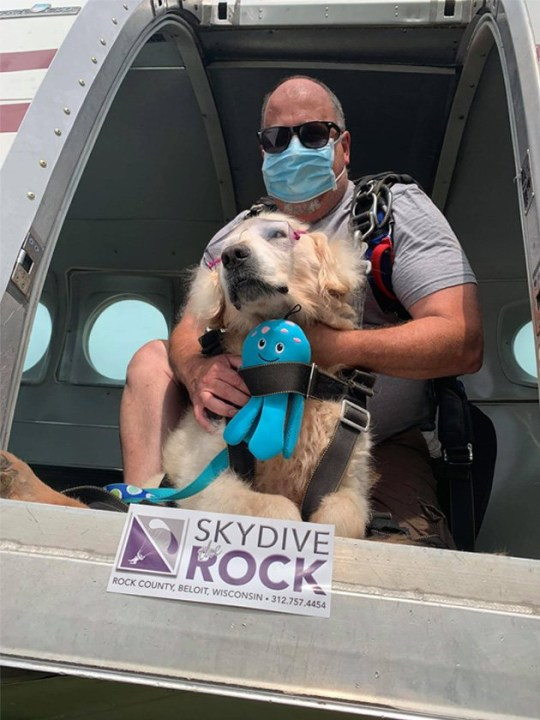 Theo the dog riding in a skydiving plane