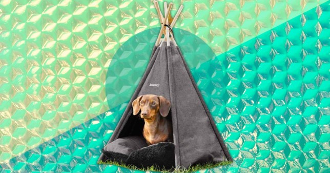 A dog in a teepee against a blue and silver background