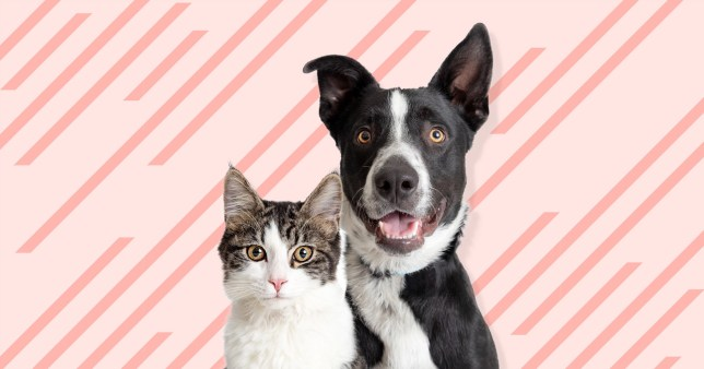 cat and dog on colourful background