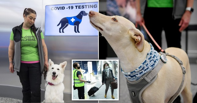 Dogs have started work at Helsinki Airport to sniff out coronavirus