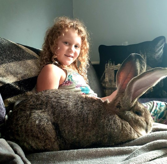 Picture of Dave the giant rabbit with Leah