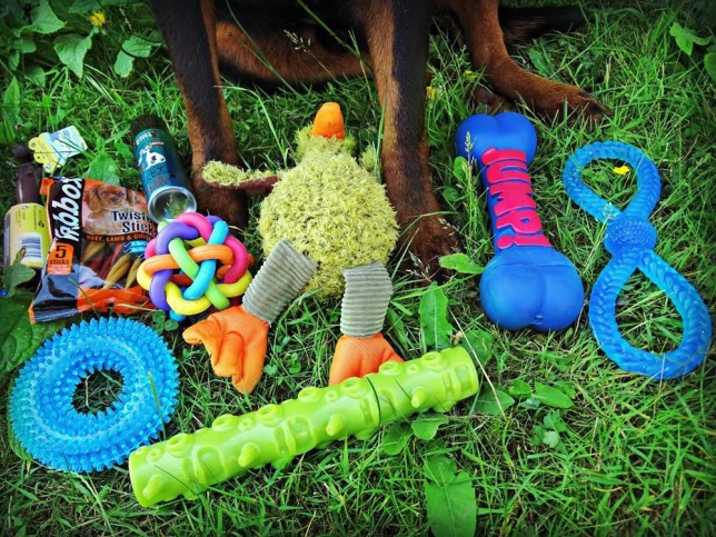 Razor with some toys that Ria won through entering competitions
