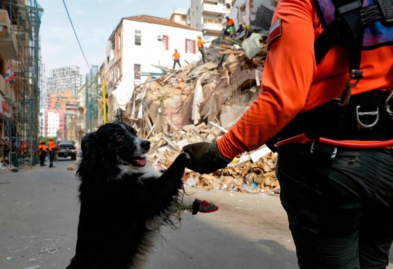 Un sauveteur chilien tient un chien renifleur par la patte alors que d'autres creusent les décombres d'un bâtiment gravement endommagé dans la capitale libanaise Beyrouth, à la recherche de survivants potentiels d'une méga-explosion dans le port adjacent il y a un mois, après que des scanners ont détecté une impulsion , le 3 septembre 2020.