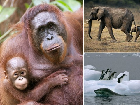 Countries are failing to stop 'unprecedented' biodiversity loss