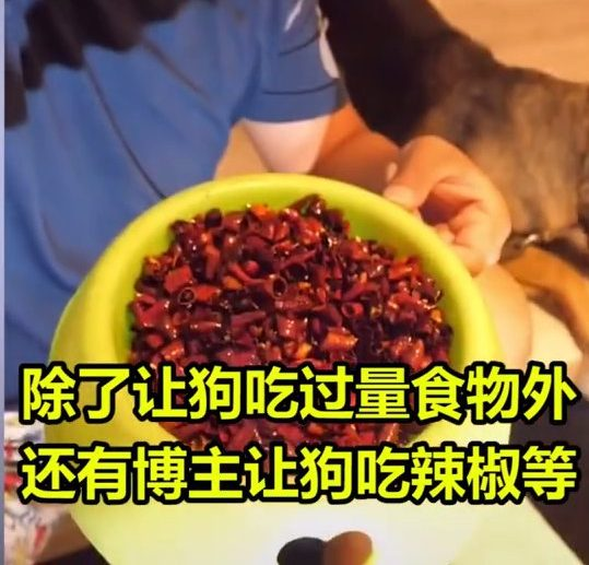 Dog bowl filled with chilli
