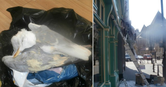 Man batters seagull to death because it took his sandwich PICS: Mike Shipway