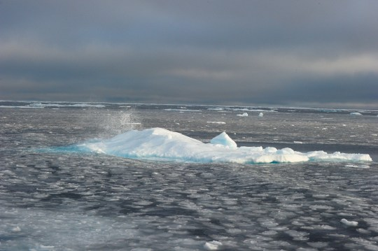 Ice chunks in the Northwest Passage near the CCGS Amundsen, a Canadian research ice-breaker navigating in the Canadian High Arctic.