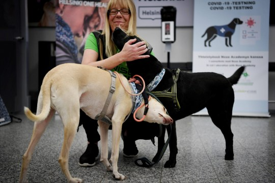 Trainer Susanna Paavilainen is seen with Kossi (L) and Miina, sniffer dogs being trained to detect the coronavirus from the arriving passengers' samples, at Helsinki Airport in Vantaa, Finland September 22, 2020. Lehtikuva/via REUTERS ATTENTION EDITORS - THIS IMAGE WAS PROVIDED BY A THIRD PARTY. NO THIRD PARTY SALES. NOT FOR USE BY REUTERS THIRD PARTY DISTRIBUTORS. FINLAND OUT. NO COMMERCIAL OR EDITORIAL SALES IN FINLAND.