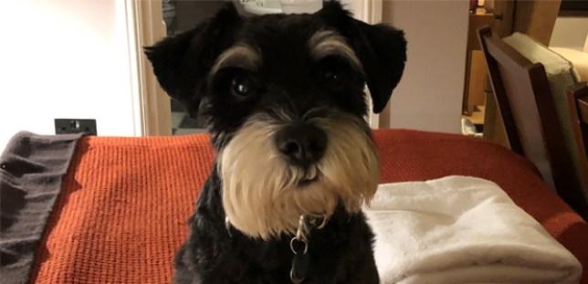Wilf dog adder bite