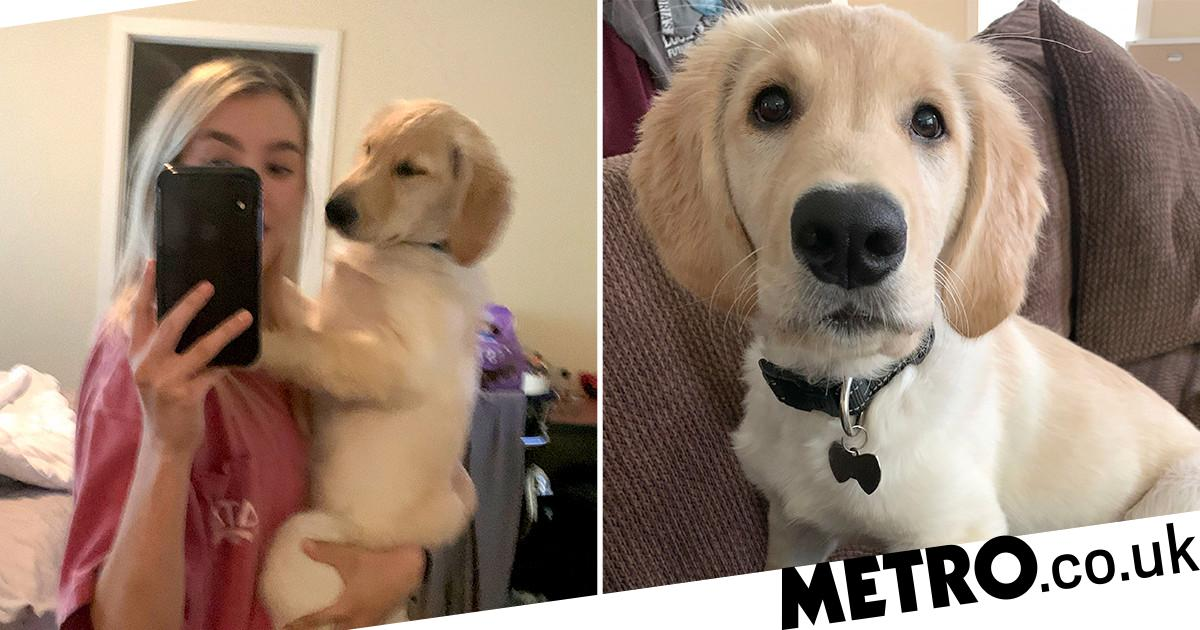 The internet loves this thicc puppy with a huge butt