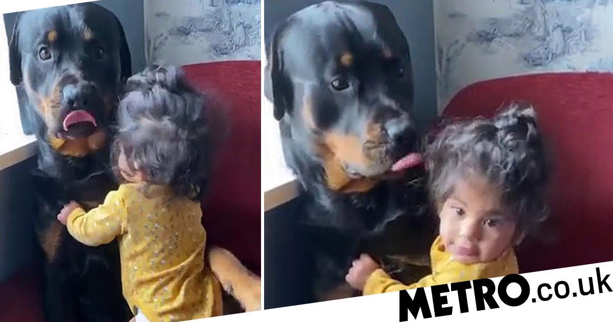 Mum's clip of baby girl cuddling giant Rottweiler goes viral